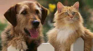 Los ciudadanos pueden aportar sus ideas al borrador a la ordenanza de tenencia y cuidado de animales