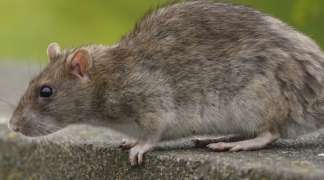 Nueva edición de la operación 'Rataouille'