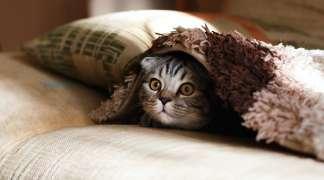 Se cumple un año trabajo de MasQuerGatos en el control de las colonias de felinos