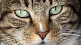 Reunión para poner en marcha en Quer el proyecto de protección de colonias de felinos
