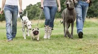 Nueva campaña de concienciación para propietarios de mascotas