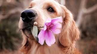 El próximo 2 de junio, campaña de vacunación de mascotas de Quer